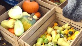 Zucche in una scatola di legno in autunno Fotografie Stock