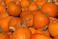 Zucche usate per Halloween, alimento o le decorazioni Immagini Stock