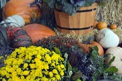 Zucche variopinte e fiori di caduta Fotografia Stock