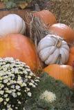 Zucche variopinte e fiori di caduta Immagine Stock