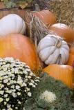 Zucche variopinte e fiori di caduta Immagini Stock Libere da Diritti
