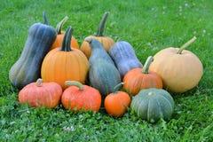Zucche variopinte e raccolto di autunno della zucca Fotografie Stock