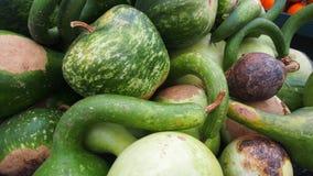 Zucche verdi differenti divertenti dell'azienda agricola immagine stock