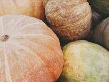 Zucche verdi ed arancio Immagini Stock