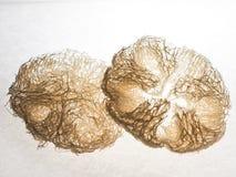 Zucchin Obrazy Stock