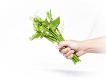 Zucchina centenaria Immagine Stock Libera da Diritti