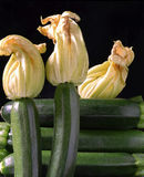 Zucchine Stock Photography