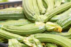 Zucchine or courgettes Royalty Free Stock Image