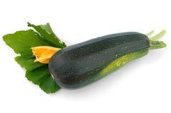 zucchini цветка зеленый Стоковое Изображение