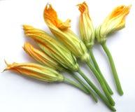 zucchini цветка courgette Стоковые Изображения
