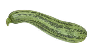 Zucchini Foto de Stock Royalty Free