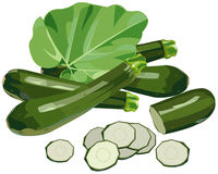 Zucchini. Illustration of zucchini with slices and leaves, isolated on white Stock Photography