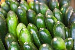 Zucchini Immagini Stock