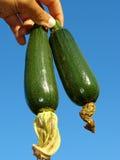 Zucchini Stock Photography