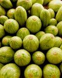Zucchini Immagine Stock