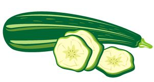 Zucchini royalty free illustration
