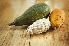 Zucchini amaro della zucca Fotografia Stock Libera da Diritti