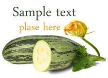 Zucchini auf weißem Hintergrund Lizenzfreies Stockfoto