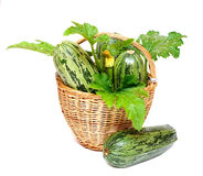 Zucchini in a basket Stock Photography