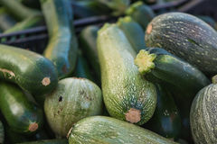 Zucchini. A bin full of different types of zucchini at a farmer's market Stock Image