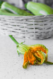 Zucchini blossom Royalty Free Stock Images