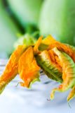 Zucchini blossom Royalty Free Stock Photography