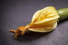 Zucchini blossom. Close-up of Zucchini blossom on a dark background Stock Image