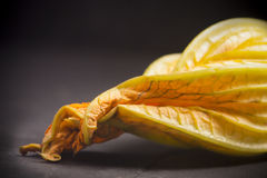 Zucchini blossom. On a dark background Royalty Free Stock Image