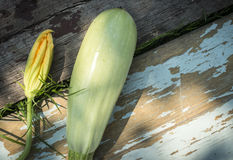 Zucchini and blossom Royalty Free Stock Photography