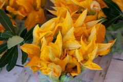 Zucchini blossoms in Volpedo. Zucchini and their blossoms grown in Volpedo, a small area within the Colli Tortonese in Italy's Piemont royalty free stock photos