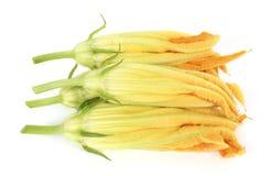 Zucchini-Blume stockbilder