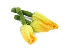 Zucchini-Blumen stockbild