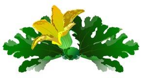 Zucchini-Blumen-Illustration Lizenzfreie Stockfotografie