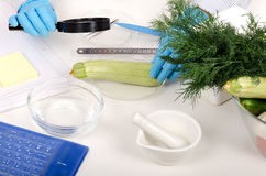 Zucchini carefully inspected in phytocontrol laboratory Stock Images