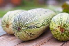 Zucchini closeup Stock Photography