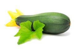 Zucchini com folha e a flor verdes Fotos de Stock Royalty Free