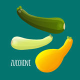Zucchini or courgette vegetables set. Different kinds of summer squash Stock Photo