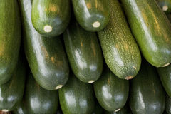 Zucchini / courgettes Royalty Free Stock Photography