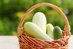 Zucchini and cucumber in a wicker basket on natural green backgr Stock Images
