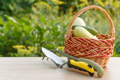 Zucchini and cucumber in a wicker basket with small hand garden Stock Photos