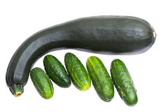 Zucchini and cucumbers Stock Images