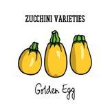 Zucchini disegnato a mano Fotografia Stock