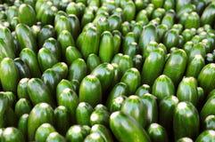 Zucchini an einem Markt der Landwirte Stockfotografie