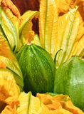 Zucchini Flower Stock Images