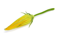 Zucchini flower Royalty Free Stock Photos