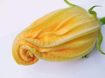 Zucchini flower Stock Photo