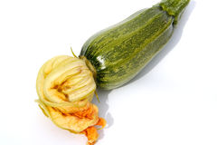 Zucchini with flower. A green Zucchini/Couchette with flower, isolated on white stock photos