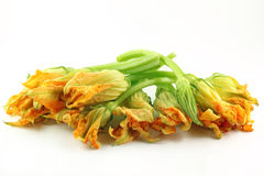 Zucchini flower Stock Photos