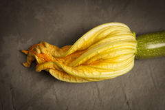 Zucchini with flower. On a dark background Stock Images