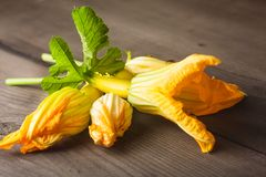 Zucchini flower Royalty Free Stock Images